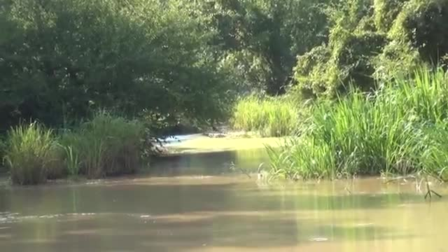 İnsane Trucks Swamp fun at the Sauced in the Mudd event at River Run.mp4